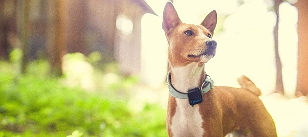 The Best Pet Tracking Device